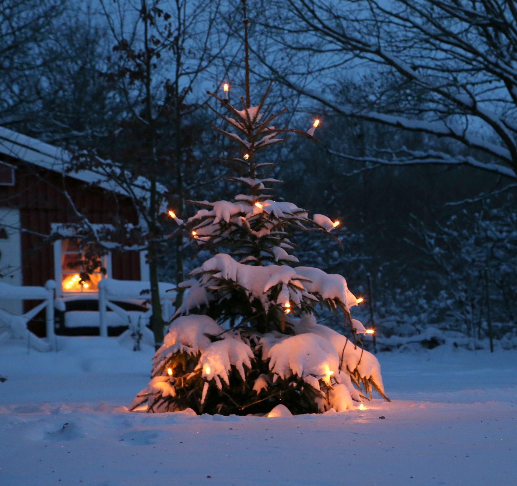 2012 12 12 003 österlen.se