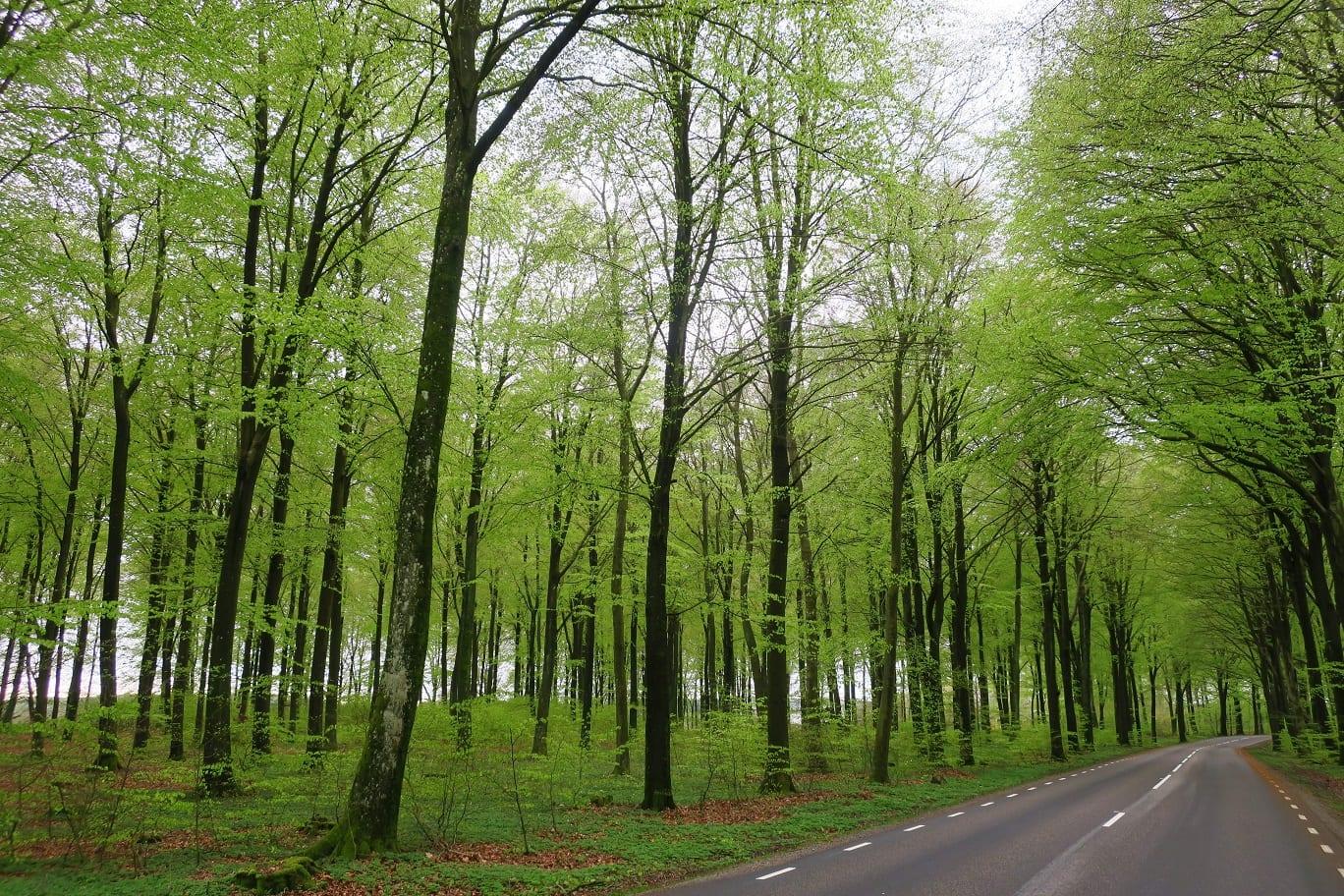 Sköna gröna söndag. österlen.se