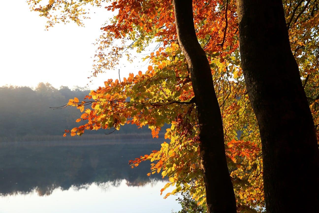 Autumn 7 österlen.se