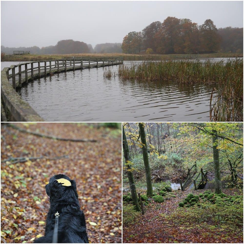 autumn österlen.se
